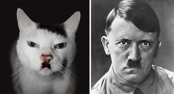13-cats-that-look-like-other-things-1