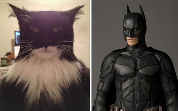 13-cats-that-look-like-other-things-13