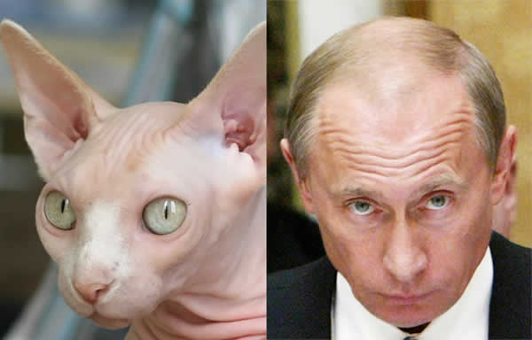 13-cats-that-look-like-other-things-7