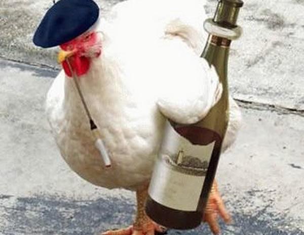 poule-8