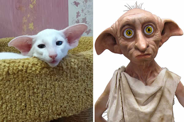 13-cats-that-look-like-other-things-11