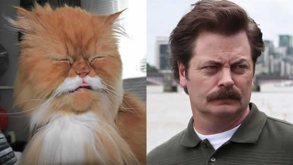 13-cats-that-look-like-other-things-5