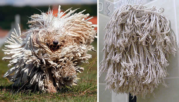 20-Dogs-That-Look-Like-Something-Else9__700