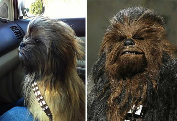 dogs-look-like-something-else-231__700